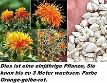 30x Saffron Pflanze Safflower Blumen Öl Samen Blume orange rot gelb Neuheit Garten Neu einjährig #356