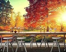 3D Fototapete Alberi und Herbst Blätter Natur