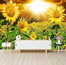 3D Fototapete Sonnenlicht Schöne Sonnenblume