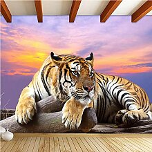 3D Fototapete Wandbild Tiger Sonnenuntergang für