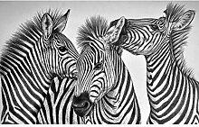 3D Fototapete Wandbilder Zebra Vlies Tapete