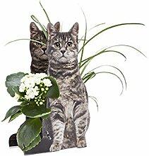 3D Glückwunsch Verpackung Katze - Tolle Geschenkidee für Katzenliebhaber - Geschenkartikel - Glückwunsch - Geburtstag - Überraschung - Katzenfreunde - Katzenliebhaber - Katzenbesitzer - außergewöhnliche Geschenke - Gruppengeschenk - Geschenk