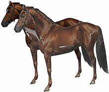 3D Glückwunsch Verpackung Pferd - Tolle Geschenkidee für Pferdefreunde - Geschenkartikel - Glückwunsch - Geburtstag - Überraschung - Pferdefreunde - Pferdeliebhaber - Pferdebesitzer - Reiter - außergewöhnliche Geschenke - Gruppengeschenk - Geschenk