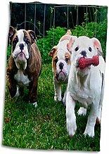 3D Rose Englische Bulldogge im Spiel TWL_60014_1
