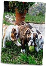 3D Rose Englische Bulldoggen Spielball TWL_60013_1