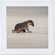 3D Rose Känguru Island Australien Sea Lion Welpe
