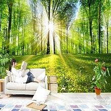 3D Tapete Vlies Sonnige Wälder 3D Wandbilder Für