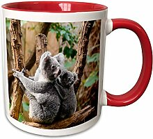 3dRose, Australien, Bear-Two Koala, Keramik,