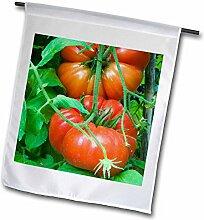 3drose Bio Tomaten auf die Pflanze–EU16nto0704–Nico Tondini–Garten Flagge, 12durch 45,7cm