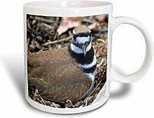 3dRose braun Birds kildeer Tierfotografie Nature