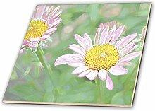 3dRose ct_25752_4 Echinacea Floral Art III