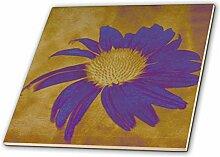 3dRose ct_42737_1 Purple Echinacea Flower-Floral