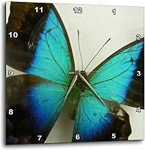 3dRose Florida Schmetterling 33cm (DPP 13935_