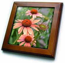 3dRose ft_25601_1 Peach Colored Echinacea