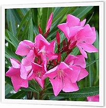 3dRose ht_46849_1 Oleander Pink, Blume, Baum,