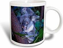 3dRose Koala Queensland Australien Tasse aus