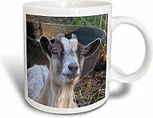 3dRose mug_21058_3 Becher, keramik, mehrfarbig