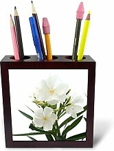 3dRose ph_46838_1 Oleander White White, Blume,