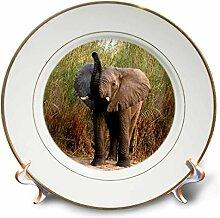 3dRose Porzellanteller, Motiv Elefant, 20,3 cm,