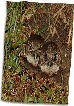 3dRose Print of Twin Baby wühlen Eulen in Cape