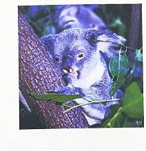 3dRose qs_37626_1 Koala Queensland,