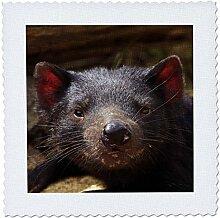 3dRose qs_76243_1 Tasmanian Devil Wildlife,