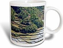 3dRose Rice Terraces, Agriculture, Banaue, Ifugao,