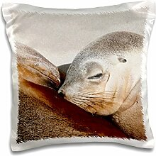 3dRose Sea Lion, Seal Bay Erhaltung Park,
