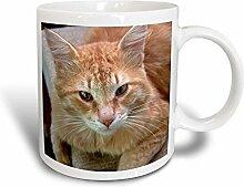 3dRose Tom, Rot-Weiß, Cat-Ginger-, Katze auf