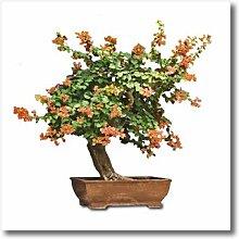 3dRose Zaubern Bonsai mit Orange Flowers-Iron auf
