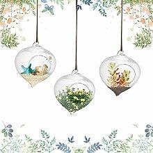 3pcs Hängepflanzen im Glas Hängen Ampel Glasvase