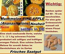3x Ananas Melonen Hingucker Obst Pflanze Rarität essbar lecker Samen Garten #173