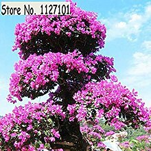 4: 100 Teile/beutel 22 arten Azalee Blumensamen