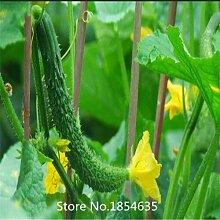 4: 30 / Bag Rote Gurke Samen Obst Gemüse Samen