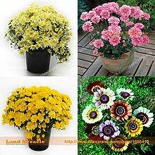 4 Arten Bonsai Chrysanthemum Blumensamen, 100