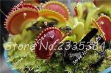 4: Hot Grass Cordyceps Samen Weird Magic Venus