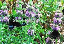 400 Sage Kräutersamen Medical Herb Pflanze wächst schnell DIY Herb