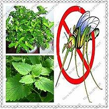 400pcs / bag Moskito Grass Mozzie Buster Startseite Bonsai Indoor Pflanze Pflanzen