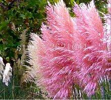 400pcs / bag Pampas garss, Pampas Samen, Pampasgras Pflanze, Zierpflanze Blumen Cortaderia Selloana Grassamen für Hausgarten 7