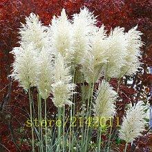 400pcs / bag Pampas garss, Pampas Samen, Pampasgras Pflanze, Zierpflanze Blumen Cortaderia Selloana Grassamen für Hausgarten 12
