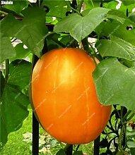 40pcs / bag Exotische Kürbiskerne Japanische Köstliches Cucurbita Golddraht Kürbis Bonsai Topfgemüsepflanze Freies Verschiffen 6
