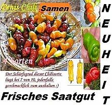 40x Lustig Chili Rot Gelb Grün Orange Samen Pflanze Penis Garten Neuheit Frisch Saatgut #418