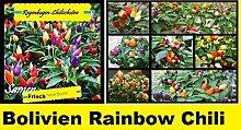 40x Regenbogen Chili Samen Hingucker Pflanze Garten Saatgut Rarität Gemüse Chili schoten Mix Bunt Neuheit #28