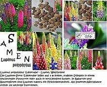 40x Regenbogen Lupinus Polyphyllus Edelknabe Samen selten Pflanze Neu bunt gemischt #21