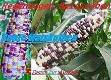 40x Regenbogen Mais Bunt Samen Garten Saatgut Hingucker Pflanze Seltene Getreide Sorte Neuheit #59