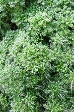 4er-Set im Gratis-Pflanzkorb - Klärpflanze! -