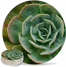 4er-Set Keramik-Untersetzer grün Sukkulenten
