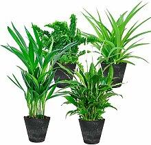 4er Set Luftreinigende Zimmerpflanzen | Vier