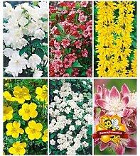 5 Meter Blüh-Hecken-Kollektion, Blütenhecke 6