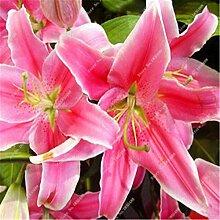 5: Neue 50 Teile/beutel Lilie Blumensamen Parfüm